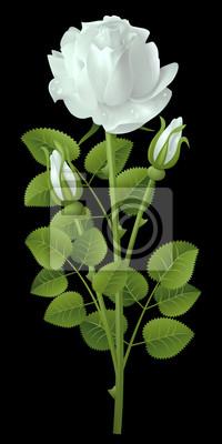 Rosa Bianca Su Sfondo Nero Carta Da Parati Carte Da Parati Maglia