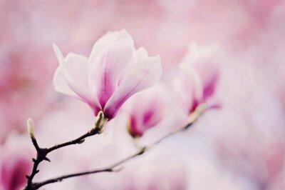 Carta da parati rosa magnolie