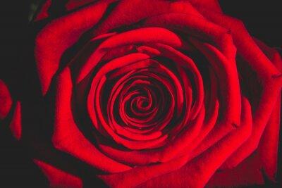 Carta da parati rosa rossa dal buio