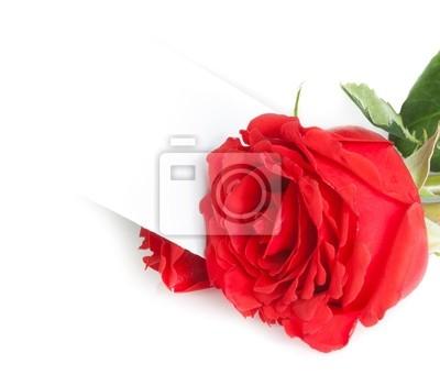 Rosa Rossa E Carta Regalo Vuoto Per Il Testo Su Sfondo Bianco Carta