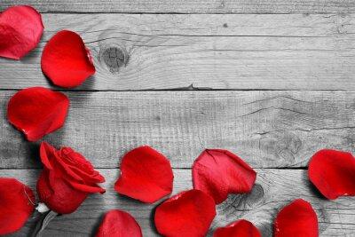Carta da parati Rosa rossa e petali su sfondo bianco e nero di legno