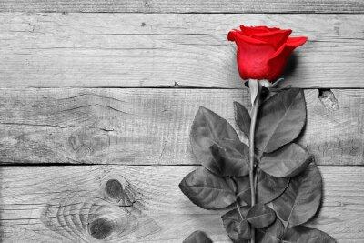 Carta da parati Rosa rossa su sfondo bianco e nero di legno