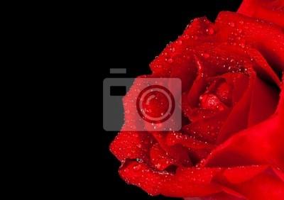 Rosa Rossa Su Sfondo Nero Giorno Di San Valentino E Il Concetto