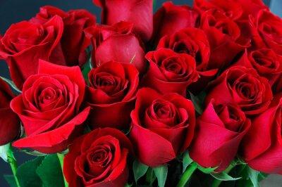 Carta da parati rosa sfondo rosso