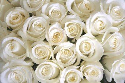 Carta da parati Rose bianche sfondo