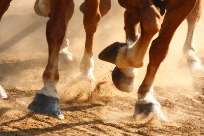 Carta da parati Running Horses Zoccoli