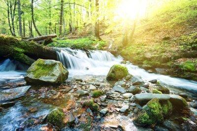 Carta da parati ruscello di montagna cascata nel verde della foresta