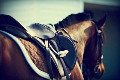 Carta da parati Saddle con staffe