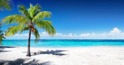 Carta da parati Scenic Beach Coral Con La Palma