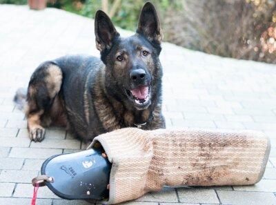 Carta da parati Schutzhund