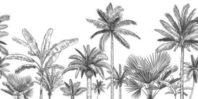Carta da parati Seamless horizontal tropical background. Hand drawn palm trees, sketch exotic tropic jungle leaves and paradise palm tree vector wallpaper illustration. Exotic palm tree botanical, rainforest foliage