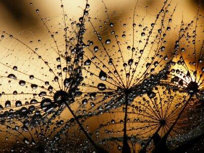 Carta da parati sementi di tarassaco bagnato