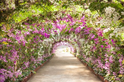 Carta da parati sentiero in un giardino botanico con orchidee costeggiano il percorso.