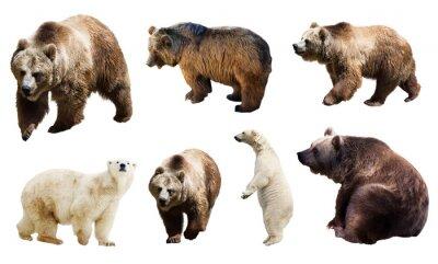 Carta da parati Set di molti orsi. Isolato su bianco