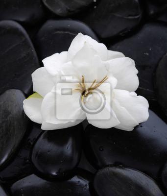 Set Di Rosa Bianca Con Sfondo Nero Pietre Carta Da Parati Carte Da
