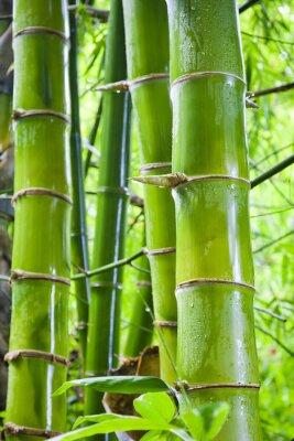 Carta da parati sfondi natura verde di bambù