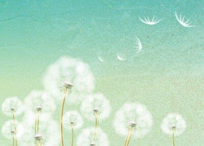 Carta da parati Sfondo astratto con fiore di tarassaco