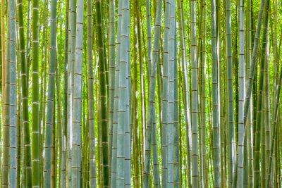 Carta da parati sfondo di bambù in natura al giorno