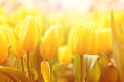 Carta da parati sfondo floreale luminoso con tulipani gialli e l'effetto luce del sole