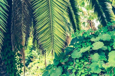 Carta da parati Sfondo tropicale di foglie di palma