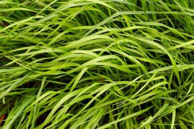 Carta da parati Sfondo verde erba