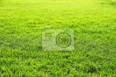 Sfondo Verde Erba Carta Da Parati Carte Da Parati Golf Erboso
