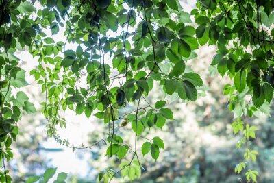 Carta da parati sfondo verde foglie