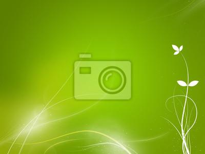 Sfondo Verde Viveza Bianco E Piante Carta Da Parati Carte Da
