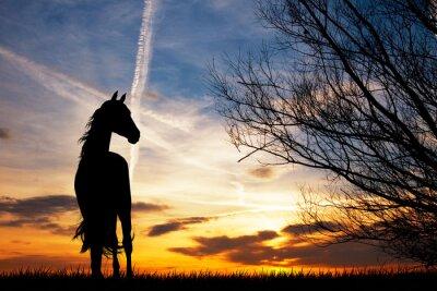 Carta da parati silhouette cavallo al tramonto