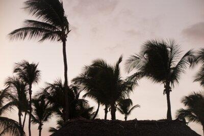 Carta da parati Silhouette palme al bel tramonto tempo