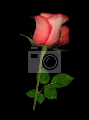 Singola Luce Rossa Rosa Su Sfondo Nero Carta Da Parati Carte Da