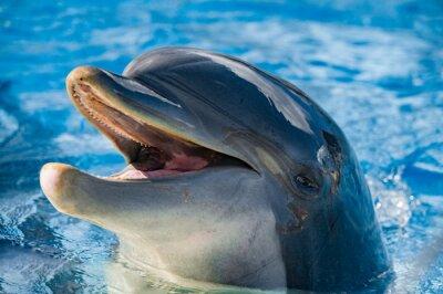 Carta da parati sorriso di un delfino ti guarda