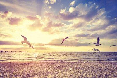 Carta da parati spiaggia tonica Vintage con uccelli che volano al tramonto