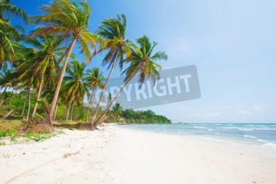 Carta da parati spiaggia tropicale con palme da cocco e mare