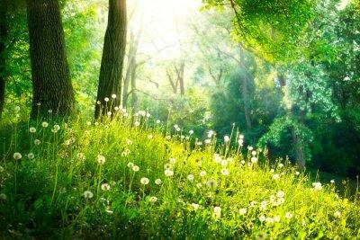 Carta da parati Spring Nature. Bellissimo Paesaggio. Erba verde e alberi