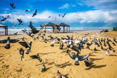 Carta da parati Stormo di piccioni è discosta rumorosi