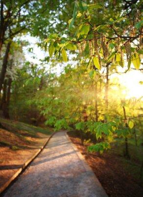 Carta da parati Strada nel parco verde della città, illuminato i raggi del tramonto