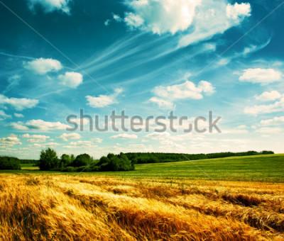 Carta da parati Summer Landscape with Wheat Field and Clouds