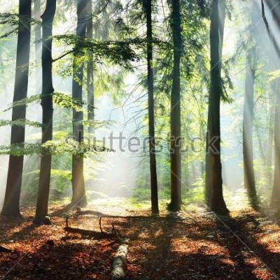 Carta da parati Sun rays in a fog in a misty morning green forest. Osnabruck, germany