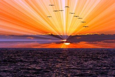 Carta da parati Sunset Ocean Birds