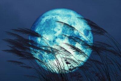 Carta da parati super full harvest moon on night sky back grass flower in the field