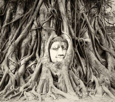 Carta da parati testa di Buddha in radici degli alberi a Wat Mahathat, Ayutthaya, Tailandia