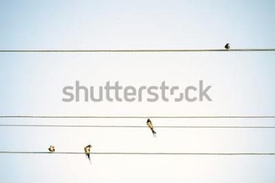 Carta da parati Tette degli uccelli che si siedono sul fondo minimalistic della molla dei cavi