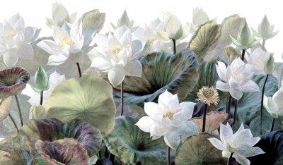 Carta da parati The scenic Lotus flowers.