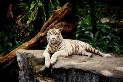 Carta da parati tigre allongé