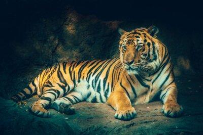 Carta da parati tigre con sfondo di pietra di montagna nel cupo maestoso effetto di colore pericoloso, sensazione spaventosa scura.