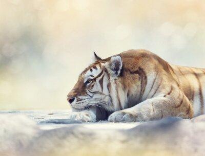 Carta da parati Tigre di riposo su una roccia