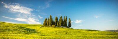 Carta da parati Toscana a primavera