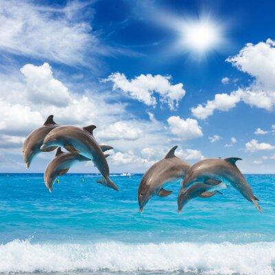 Carta da parati tre delfini che saltano