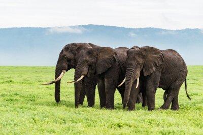 Carta da parati tre elefanti in fila sul pavimento Ngorongora cratere